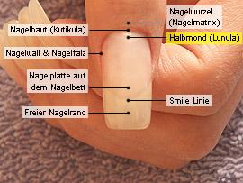 Halbmond (Lunula)