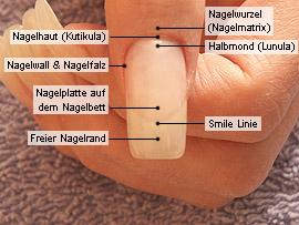 Grundkenntnisse der Fingernagelkosmetik