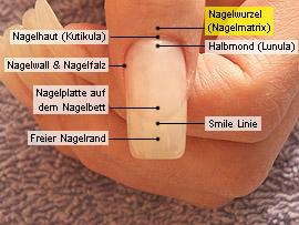 Nagelwurzel (Nagelmatrix)
